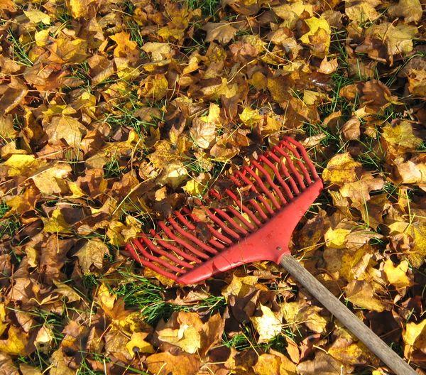 Comment nettoyer son r teau la vie de jardin mon blog ma passion mon jardin - Comment bien orienter son antenne rateau ...